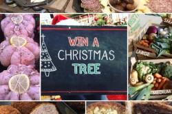 Win a Tree