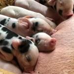 Flora & Piglets June '19