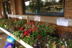 Plants End of Season Sale